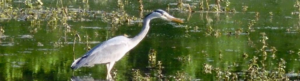 Bonnevaux - stork