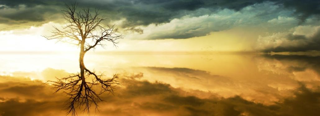 tree and sky by Johannes Plenio