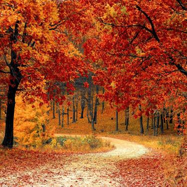 Fall Update & News